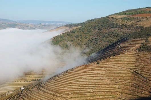 The vines of the Douro valley, the Porto region (photo Marie-Line Darcy)