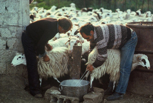 The agricultural sector is the breeding ground for poverty and illiteracy (Photo: Europa)