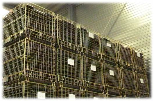 The best storage conditions for wine (photo: DR)