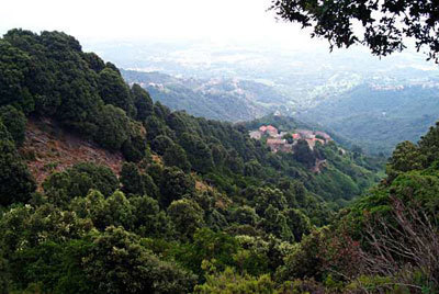 What services are provided by the Mediterranean forests, and what is their value?