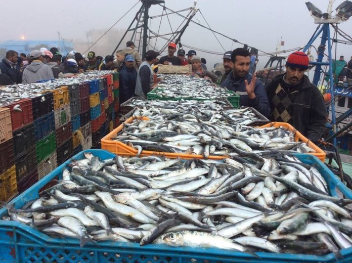 Fishing is one of the main resources of Western Sahara (photo: DR)