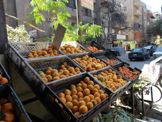 Egypt leader in the export of oranges