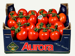 The reputation of Pachino's tomatoes has spread beyond Sicily (photo Aurora)