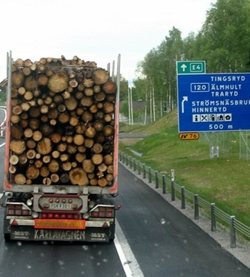Mediterranean forests don't have the same status as Finnish or Swedish forests which are exploited (photo MN)