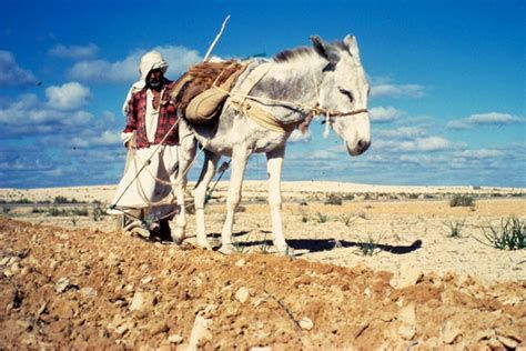 Libyan soils are 90% arid, hence the importance of good irrigation (photo: FAO)