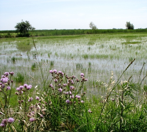 No less than 18.5 million hectares in the Mediterranean are wetland areas (Photo MN)