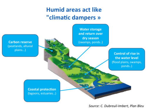 Wetland areas cushion the impact of climate change in the Mediterranean