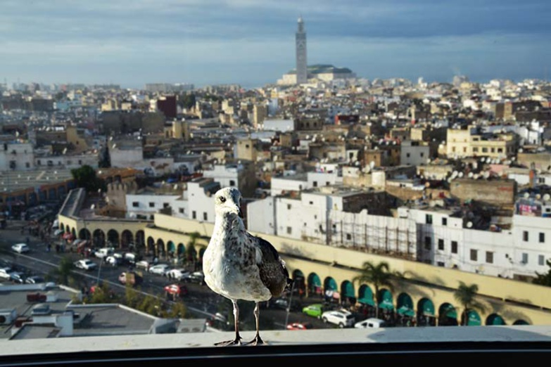 The city of Casablanca is reconfined because of a lack of respect for barrier gestures (photo: F.Dubessy)