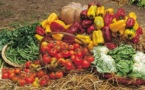 Short supply chains for fruit and vegetables gain momentum in Italy