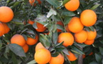 Innovation and transport: a new citrus route emerges in the Mediterranean