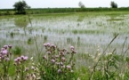 Wetlands for cushioning the effects of global warming