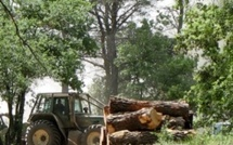 A strategic framework for sustainable forests in the Mediterranean